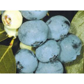 Лохина Спартан, Fruitech