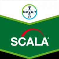 Скала – фунгіцид, Bayer