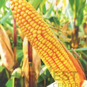 ДС0493Б ФАО 250 – кукурудза, Brevant