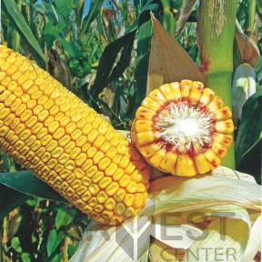 ДС1083С ФАО 360 – кукурудза, Brevant