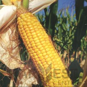 ДС1385А ФАО 230 – кукурудза, Brevant