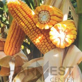 П9486 ФАО 340 – кукурудза, Brevant