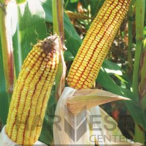 ДС1071С ФАО 350 – кукурудза, Brevant