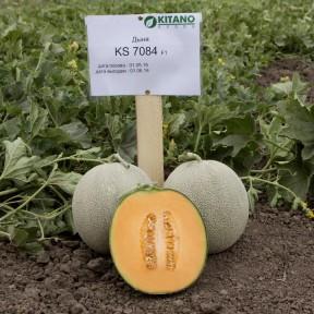 Диня KS 7084 F1, Kitano Seeds