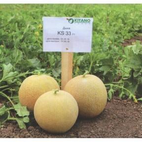 Диня KS 33 F1, Kitano Seeds