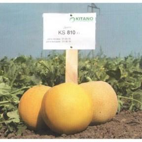 Диня KS 810 F1, Kitano Seeds