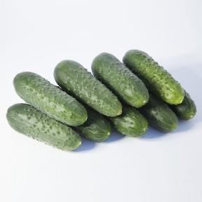 Огірок KS 70 F1, Kitano Seeds
