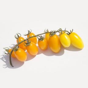 Томат KS 3670 F1, Kitano Seeds