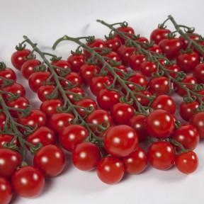 Томат KS 4559 F1, Kitano Seeds