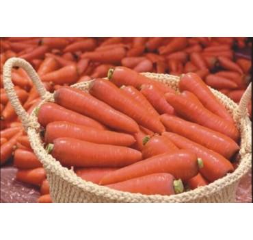 Морква TI-134 F1, Takii Seeds