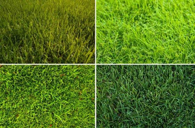 купить газонную траву