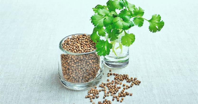 Семена кинзы фото
